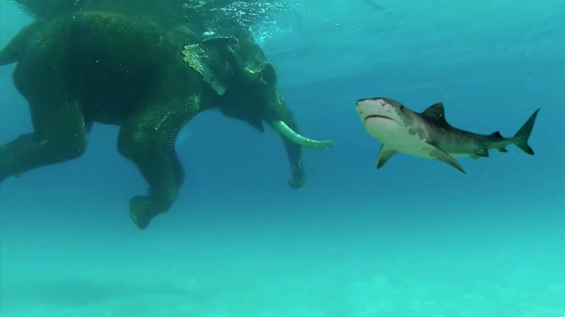 shark elephant