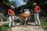 Bevo 15 at his ranch outside of Austin. (Tamir Kalifa)